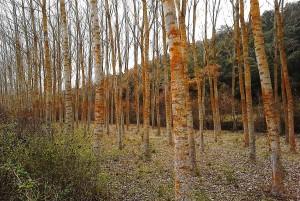 Bild Baumpflege Baumarbeiten Baumkletterer Ber